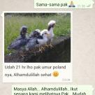wpid screenshot 2014 10 11 23 33 391 Salah Salah Satu Testimoni dari Pelanggan Kami di Riau Tentang Keberhasilanya Menetaskan Telur Ayam Hias yang Kami Kirimkan Jual Ayam Hias HP : 08564 77 23 888 | BERKUALITAS DAN TERPERCAYA Salah Salah Satu Testimoni dari Pelanggan Kami di Riau Tentang Keberhasilanya Menetaskan Telur Ayam Hias yang Kami Kirimkan Salah Salah Satu Testimoni dari Pelanggan Kami di Riau Tentang Keberhasilanya Menetaskan Telur Ayam Hias yang Kami Kirimkan