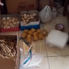 wpid img 20141114 wa0013 1 Telur Ayam Hias Jual Ayam Hias HP : 08564 77 23 888 | BERKUALITAS DAN TERPERCAYA Telur Ayam Hias Telur Ayam Hias Pesanan Pak Fulaih Banjarbaru Kalimantan Selatan dengan Komposisi Telur Cemani, Telur Mutiara, Telur Kalkun Putih serta Telur Kalkun