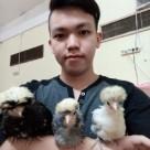 wpid img 20141109 1251071 Telur Ayam Polan Jual Ayam Hias HP : 08564 77 23 888   BERKUALITAS DAN TERPERCAYA Telur Ayam Polan Telur Ayam Polan Sukses di Tetaskan Mas Erwin di Palembang