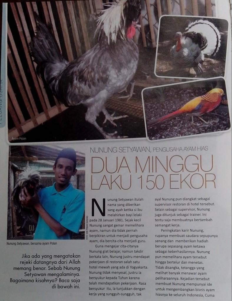 Jualayamhias.com at majalah G priority a -1
