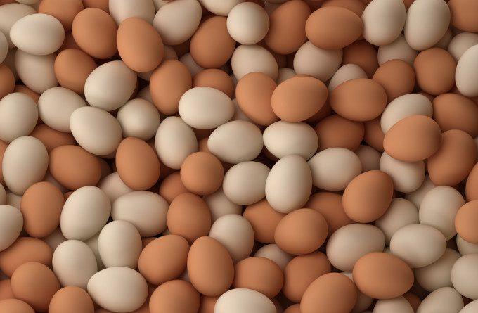 Harga Telur Kampung