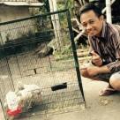 wpid wp 1444782504187 Jual Ayam Hias HP : 08564 77 23 888 | BERKUALITAS DAN TERPERCAYA Bibit Ayam Kalkun Pesanan Mas Putra di Trowulan Kab Mojokerto Jawa Timur