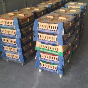 Ayam jawa super, DOC ayam jawa super, bisnis peternakan yang paling menguntungkan, harga DOC ayam jawa super, vaksin unggas alami, vaksin alami dan buatan yang diproduksi manusia, manfaat kunyit