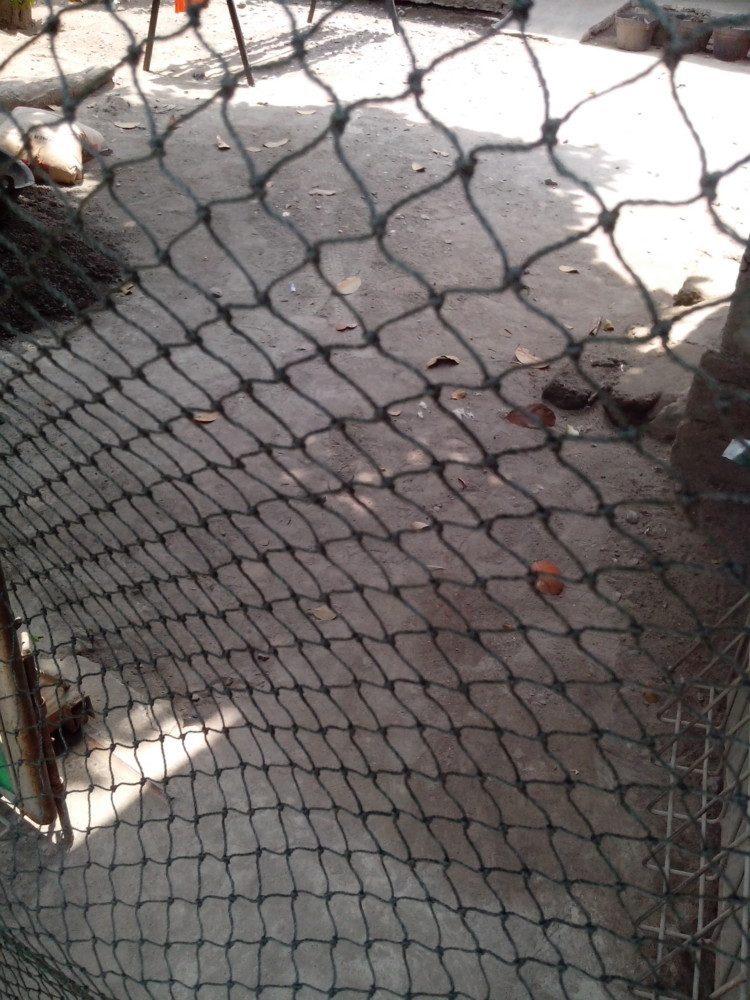 Jaring Tanaman/ Jaring Kandang Ayam