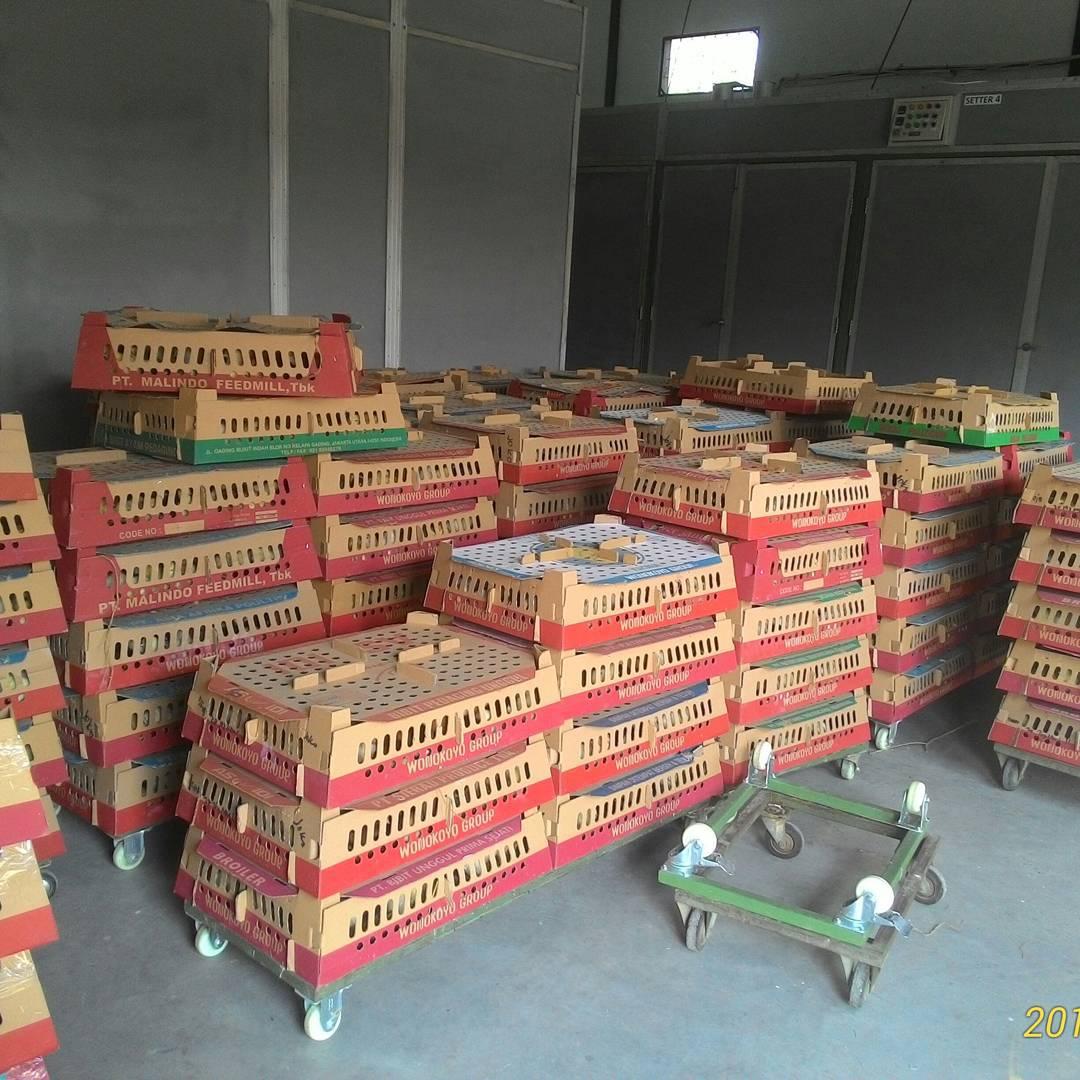 BOX DOC Ayam Kampung Super dan siap kirim ke seluruh wilayah di Indonesia
