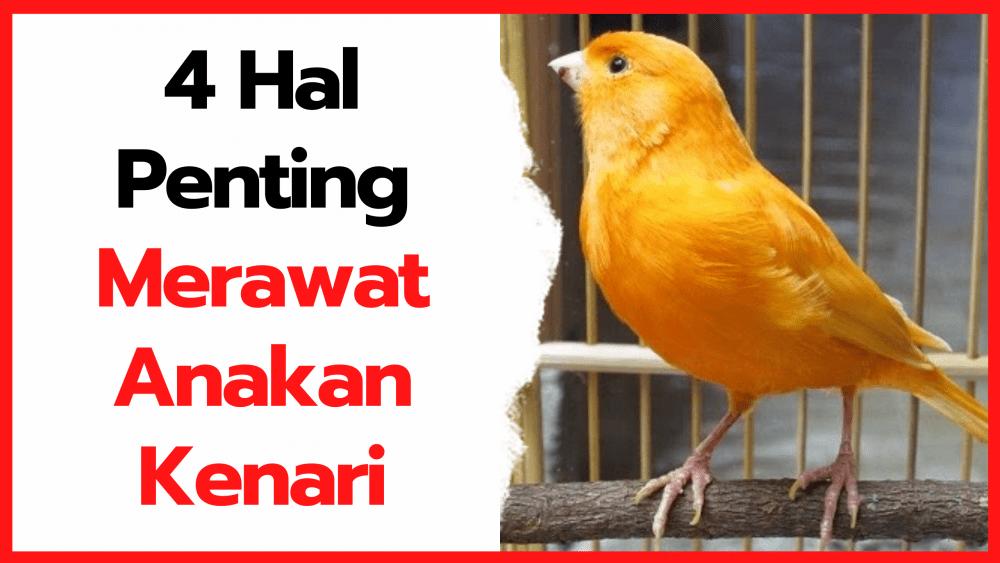 4 Hal Penting dalam Merawat Anakan Burung Kenari yang Baru Menetas