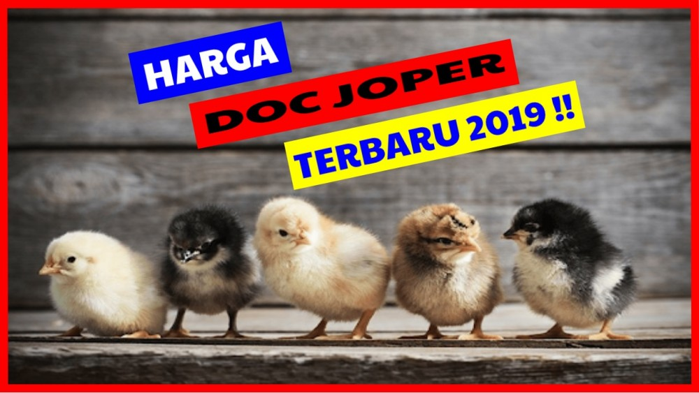 Harga DOC Joper 2019