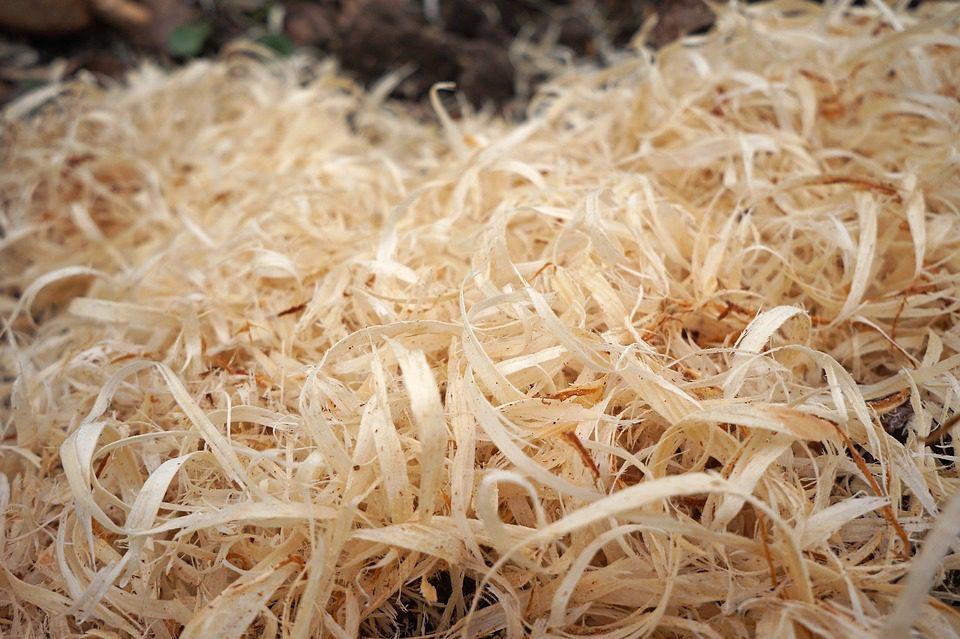 Serutan Kayu adalah bahan litter yang cukup banyak di gunakan oleh para peternak.