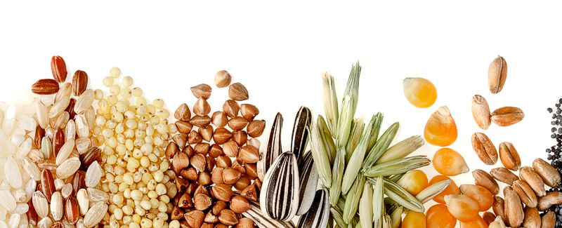 Grains legumes seeds silver pheasant Jual Ayam Hias HP : 08564 77 23 888 | BERKUALITAS DAN TERPERCAYA silver pheasant Silver Pheasant Lovers? Find The Description, Origin, Behavior, Facts, And Other Information About This Species In This Site!