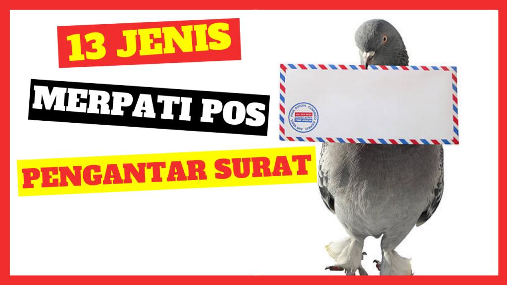 cropped Merpati Pos Merpati Pos Jual Ayam Hias HP : 08564 77 23 888 | BERKUALITAS DAN TERPERCAYA Merpati Pos 13 Jenis Merpati Pos yang Legendaris Sepanjang Masa