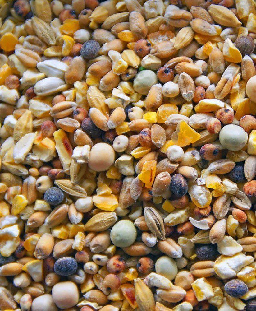 Grains and seeds Pheasant food Jual Ayam Hias HP : 08564 77 23 888   BERKUALITAS DAN TERPERCAYA Pheasant food Pheasant Food : Knowing What To Feed A Pheasant To Raising A Healthy, Strong, And High Quality Bird