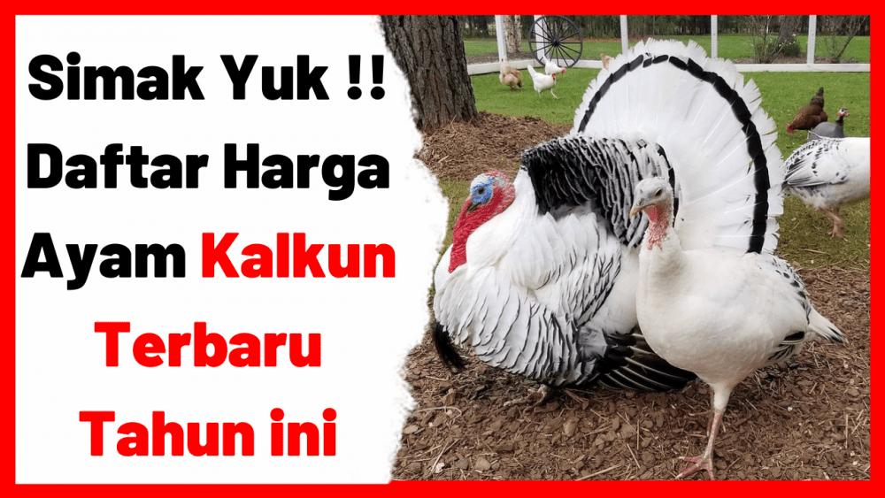 Simak Yuk !! Daftar Harga Ayam Kalkun Terbaru Tahun ini | cover
