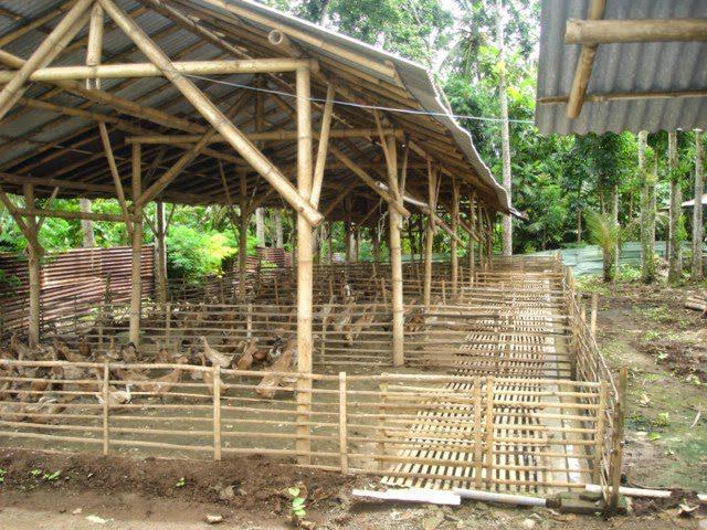 Kandang Tipe Postal Beternak Bebek Peking Jual Ayam Hias HP : 08564 77 23 888   BERKUALITAS DAN TERPERCAYA Beternak Bebek Peking Tips Beternak Bebek Peking untuk Pemula