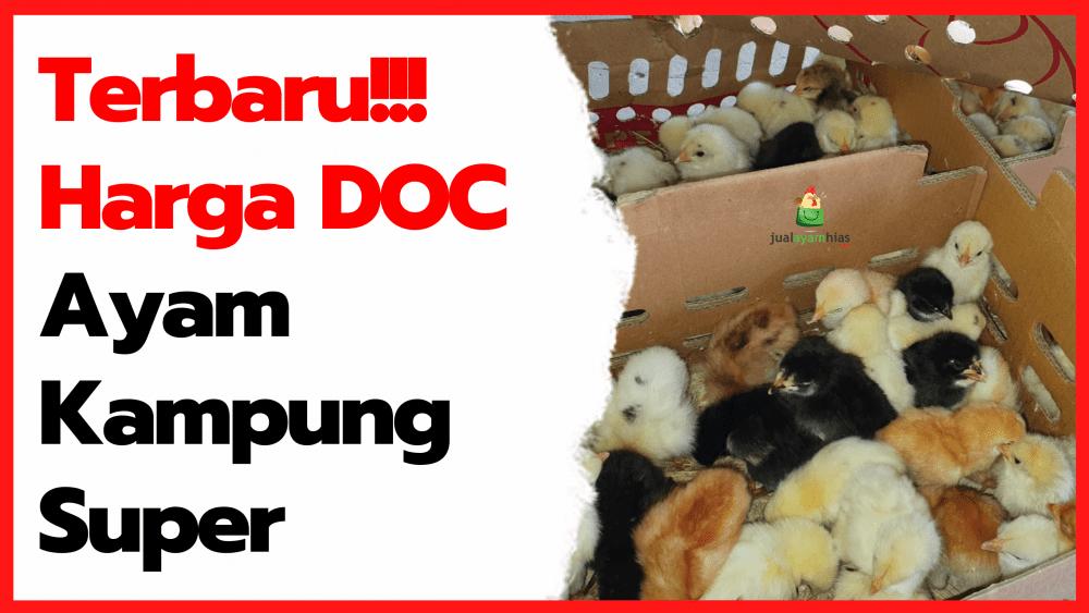 Terbaru Fresh!!! Harga DOC Ayam Kampung Super (Joper) di Tahun 2021 | thumbnail