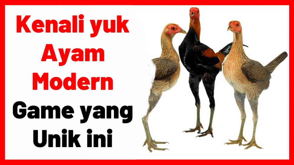 Kenali yuk Ayam Modern Game yang Unik ini | cover