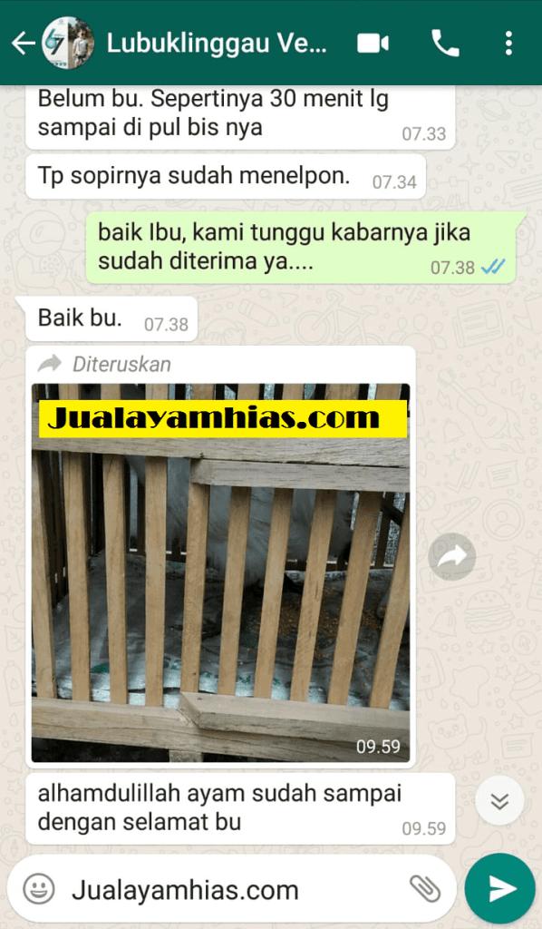 Ayam kapas batik Lubuklinggau testimoni jualayamhias Jual Ayam Hias HP : 08564 77 23 888 | BERKUALITAS DAN TERPERCAYA testimoni jualayamhias Testimoni Jualayamhias