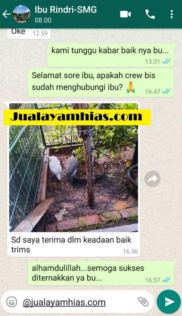 Ibu Rindri Ayam mutiara Semarang Jateng testimoni jualayamhias Jual Ayam Hias HP : 08564 77 23 888 | BERKUALITAS DAN TERPERCAYA testimoni jualayamhias Testimoni Jualayamhias