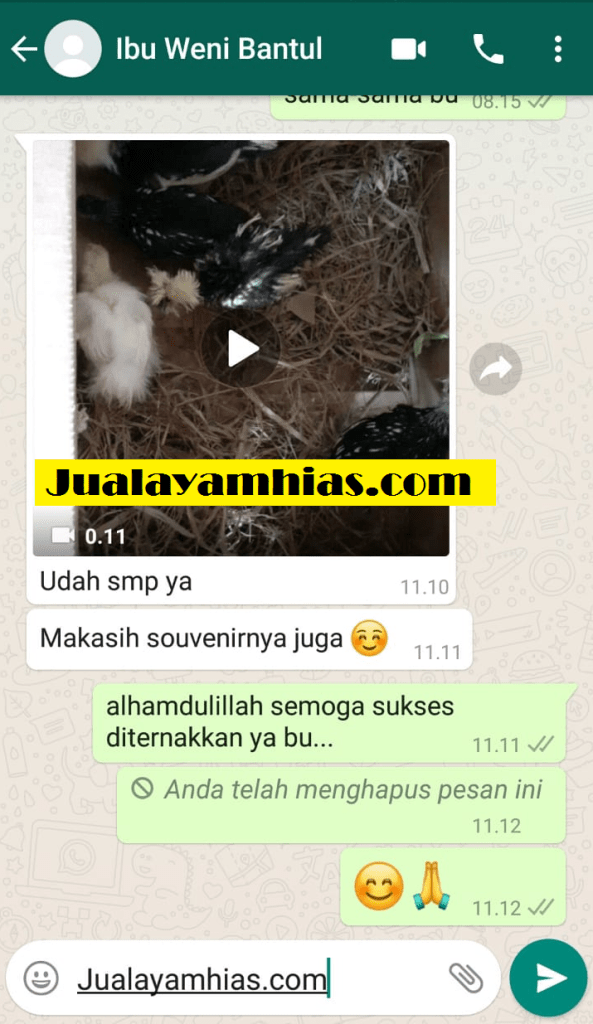 Ibu Weni Ayam kapas batik poland Bantul testimoni jualayamhias Jual Ayam Hias HP : 08564 77 23 888 | BERKUALITAS DAN TERPERCAYA testimoni jualayamhias Testimoni Jualayamhias
