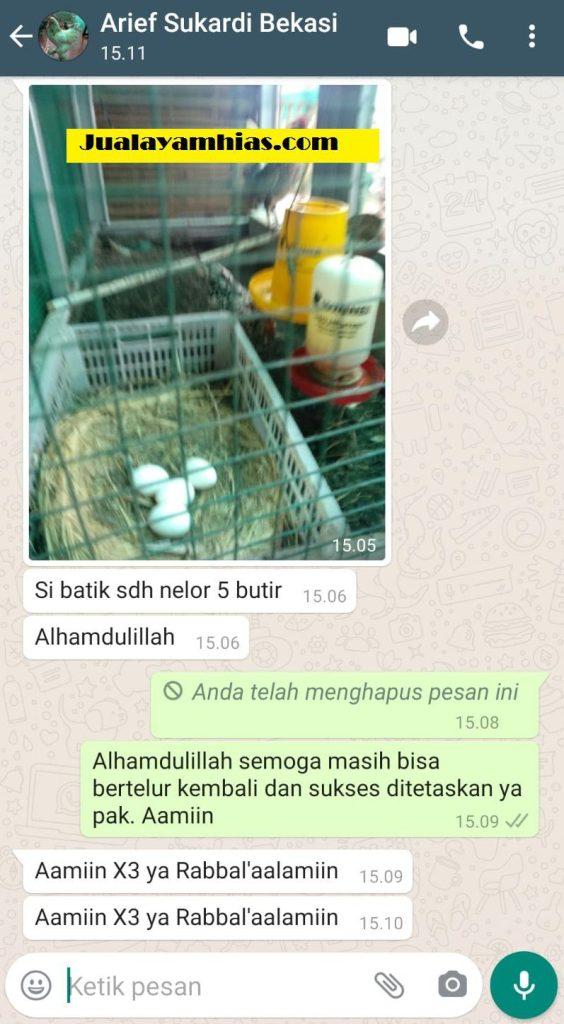 Pak Arief Ayam batik Bekasi Jabar testimoni jualayamhias Jual Ayam Hias HP : 08564 77 23 888 | BERKUALITAS DAN TERPERCAYA testimoni jualayamhias Testimoni Jualayamhias