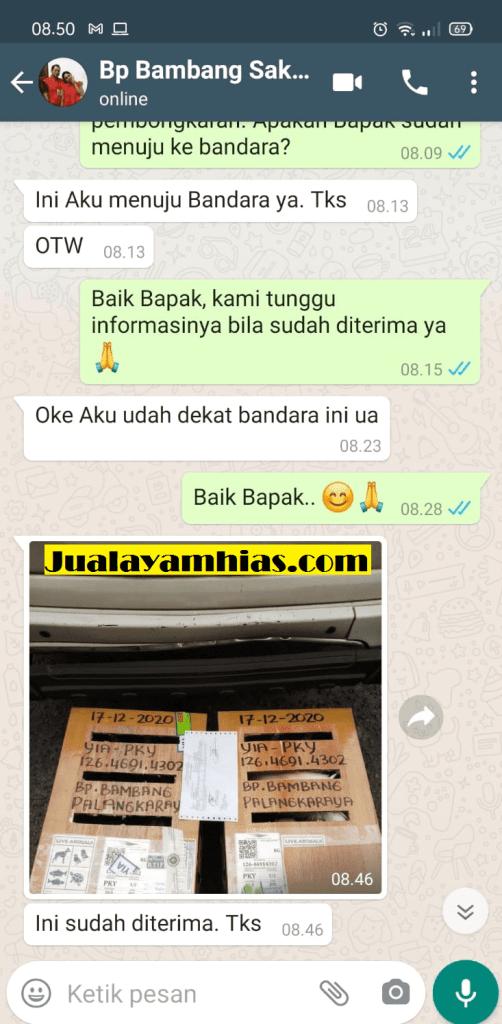 Pak Bambang Ayam Pelung dan Ketawa Palangkaraya testimoni jualayamhias Jual Ayam Hias HP : 08564 77 23 888 | BERKUALITAS DAN TERPERCAYA testimoni jualayamhias Testimoni Jualayamhias