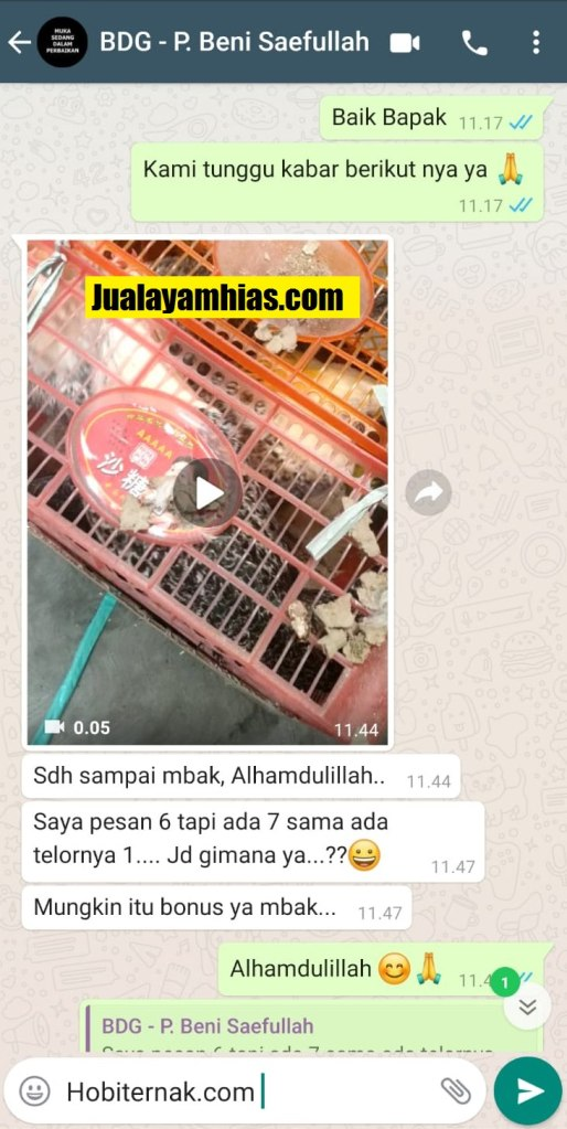 Pak Beni Ayam arab Bandung Jabar testimoni jualayamhias Jual Ayam Hias HP : 08564 77 23 888 | BERKUALITAS DAN TERPERCAYA testimoni jualayamhias Testimoni Jualayamhias