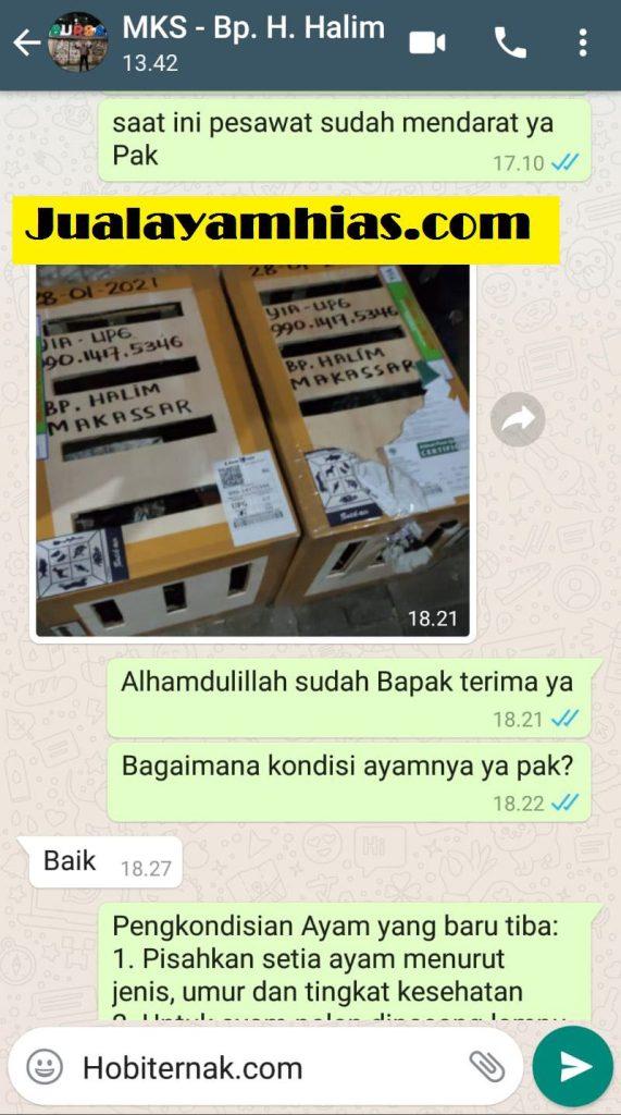 Pak Haji Halim Kalkun bronze golden palm Makassar testimoni jualayamhias Jual Ayam Hias HP : 08564 77 23 888 | BERKUALITAS DAN TERPERCAYA testimoni jualayamhias Testimoni Jualayamhias