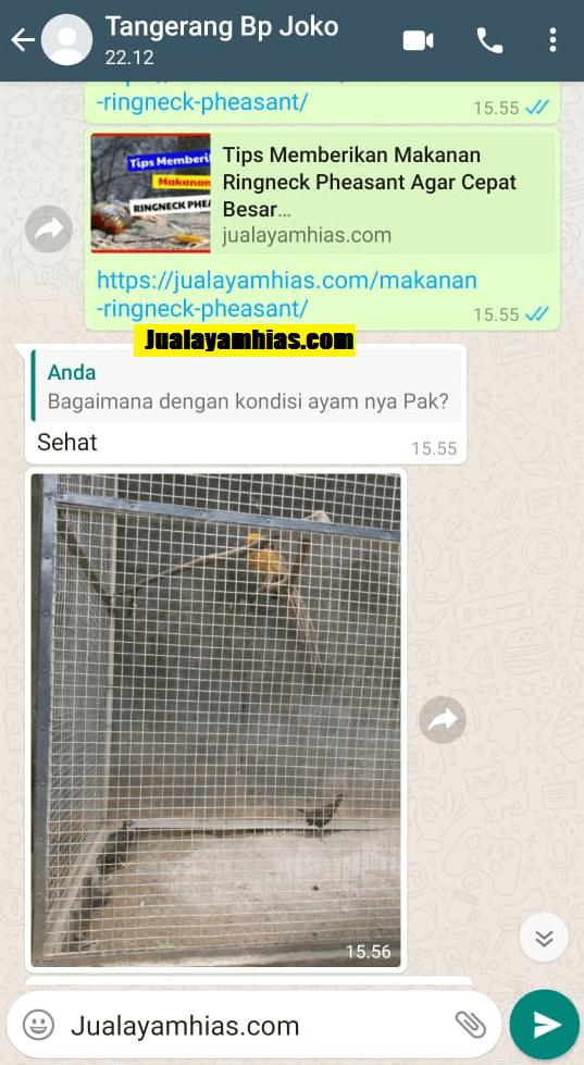 Pak Joko Green ringneck pheasant Tangerang testimoni jualayamhias Jual Ayam Hias HP : 08564 77 23 888 | BERKUALITAS DAN TERPERCAYA testimoni jualayamhias Testimoni Jualayamhias