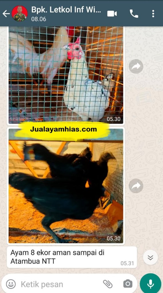 Pak Letkol Inf Ayam cemani ketawa NTT testimoni jualayamhias Jual Ayam Hias HP : 08564 77 23 888 | BERKUALITAS DAN TERPERCAYA testimoni jualayamhias Testimoni Jualayamhias