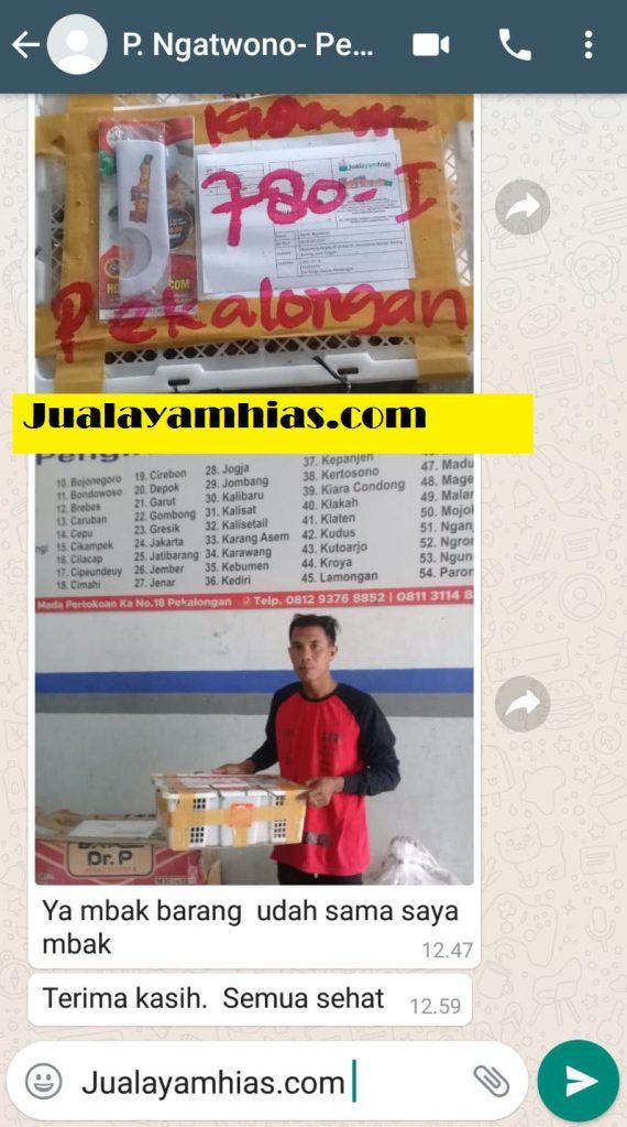 Pak Ngatwono Cemani usia 1 bulan 2 bulan Batang Jateng testimoni jualayamhias Jual Ayam Hias HP : 08564 77 23 888 | BERKUALITAS DAN TERPERCAYA testimoni jualayamhias Testimoni Jualayamhias