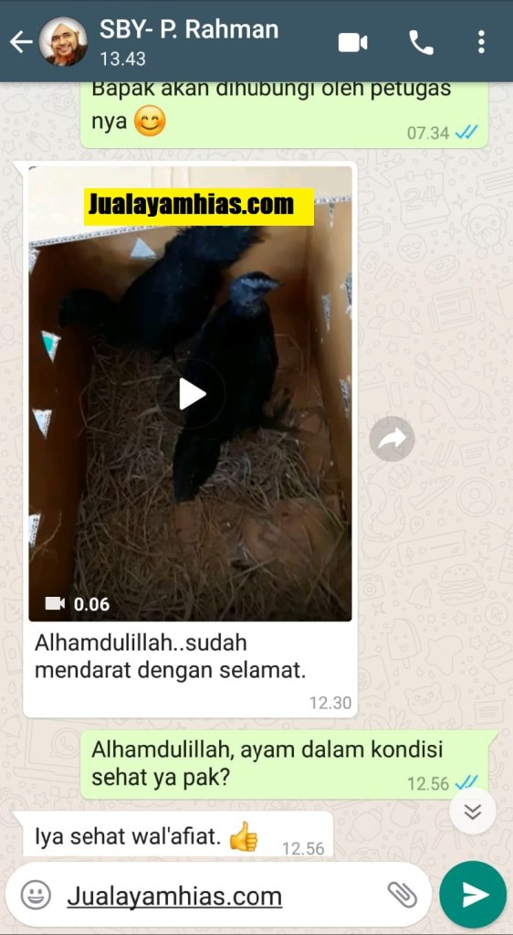 Pak Rahman Ayam cemani Surabaya Jatim testimoni jualayamhias Jual Ayam Hias HP : 08564 77 23 888 | BERKUALITAS DAN TERPERCAYA testimoni jualayamhias Testimoni Jualayamhias