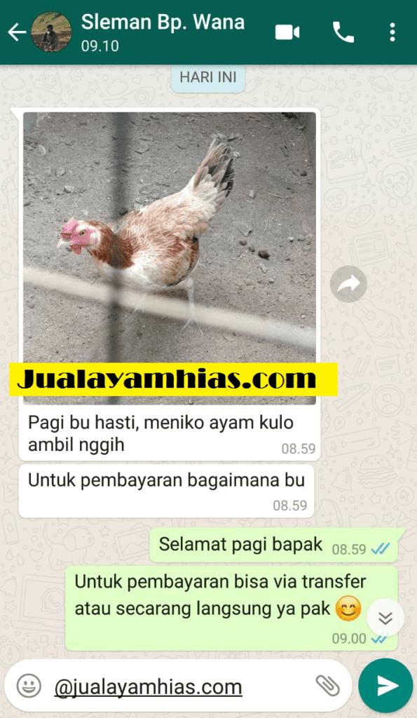 Pak Wana Ayam pelung DIY testimoni jualayamhias Jual Ayam Hias HP : 08564 77 23 888 | BERKUALITAS DAN TERPERCAYA testimoni jualayamhias Testimoni Jualayamhias